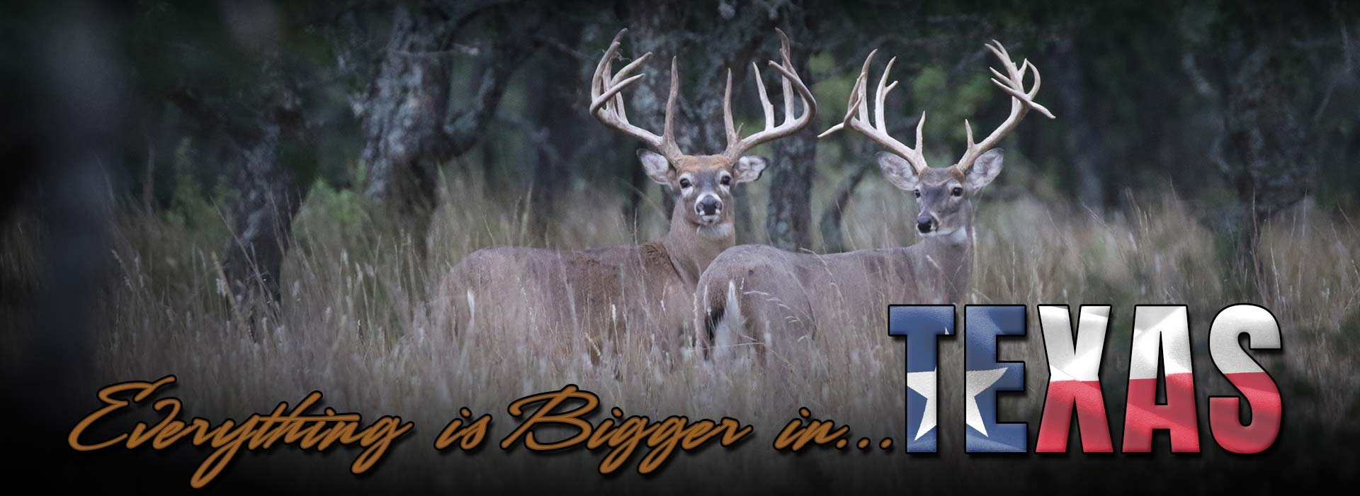 HighPoint Ranch - Texas Hunting Outfitters near Austin & San