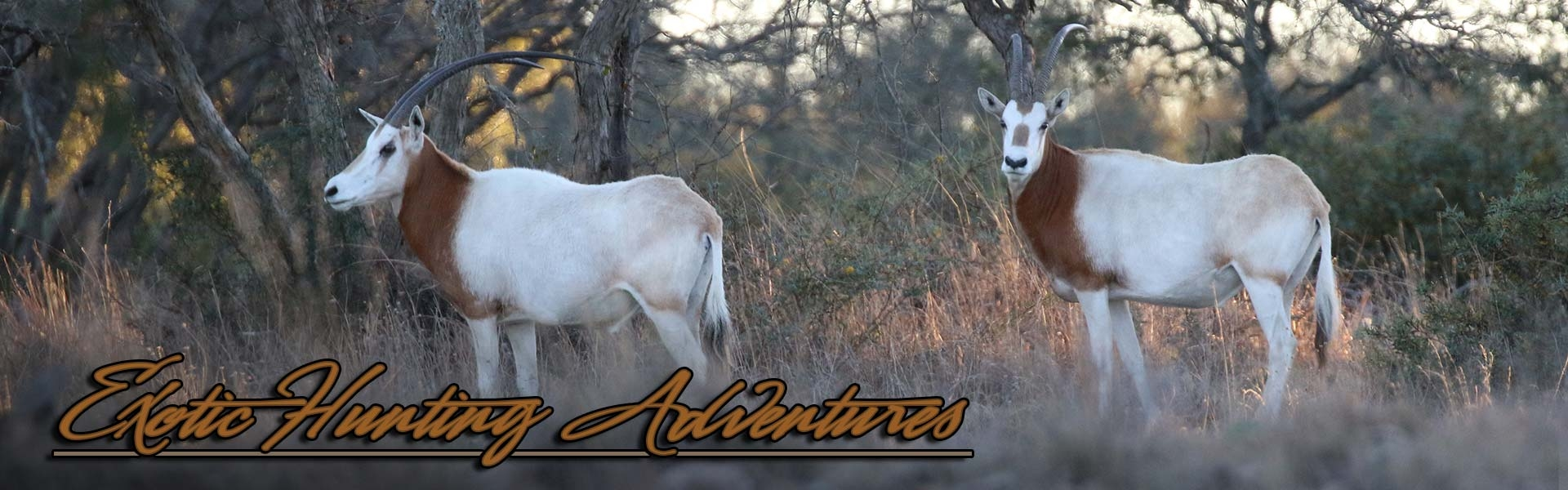 Exotic Hunts Offered At HighPoint Ranch