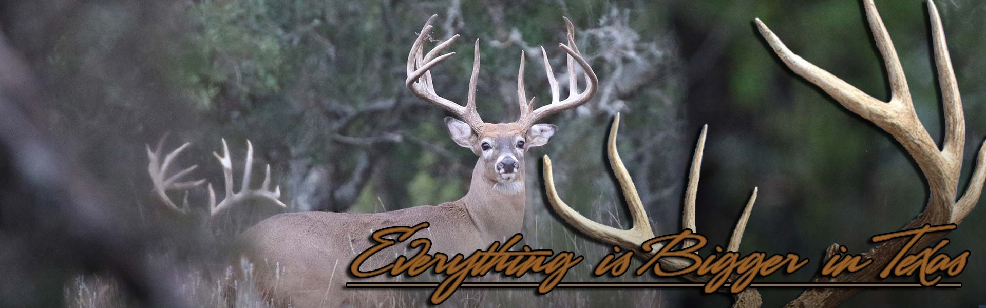 Trophy Whitetail Hunts in Texas
